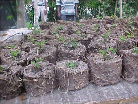 Rice Straw Briquette for Tree Nursery