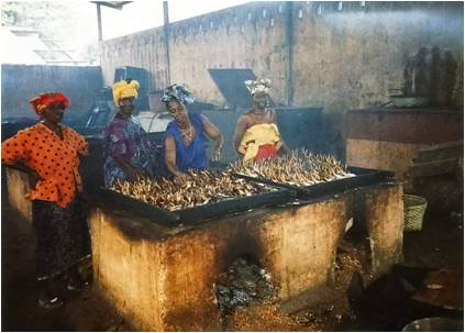Chorkor oven being used for bonga at Bonfi (Conakry, Guinea)